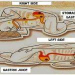 दायें करवट सोना सेहत के लिये हानिकारक